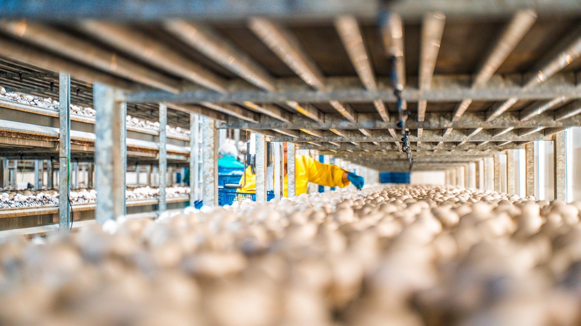 Kolejny obiekt we Francji - AgroProjects